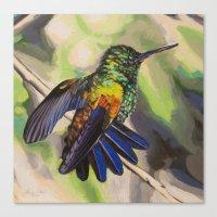 Copper-Rumped Hummingbird Canvas Print