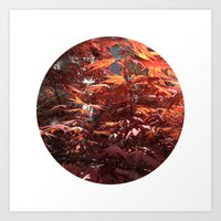 Planetary Bodies - Japanese Maple Art Print