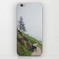 Donkeys  iPhone & iPod Skin