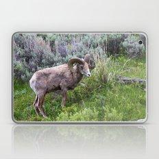 Big Horn Ram Laptop & iPad Skin