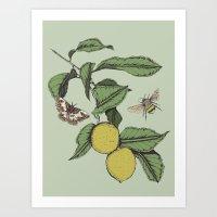 Lemons in Spring Art Print
