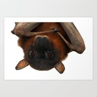 Little Red Flying Fox Hanging Out Art Print