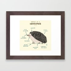 Anatomy of a Hedgehog Framed Art Print