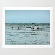 Water Fowl Art Print