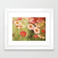 Daisy Love Framed Art Print