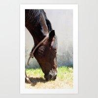 horse t Art Print