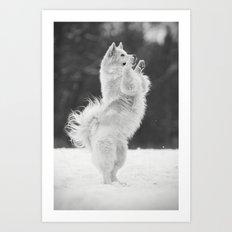Lipizzan horse - my cute dog Art Print