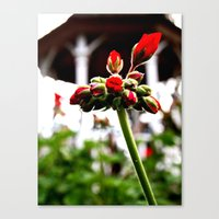 Canvas Print featuring Late Bloomers by Vorona Photography