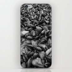 Mussell Shoals iPhone & iPod Skin