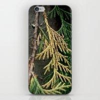 Cedar branch iPhone & iPod Skin