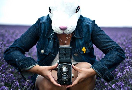 Bunny in a lavender field. Art Print