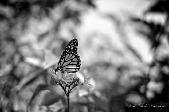 Papillion en  Noir Art Print