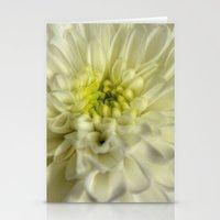 White Chrysanthemum Stationery Cards