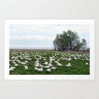 Les Grandes Oies Des Nei… Art Print