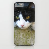 Cat On The Wall iPhone 6 Slim Case