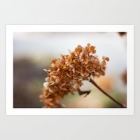 Winter Hydrangea II Art Print