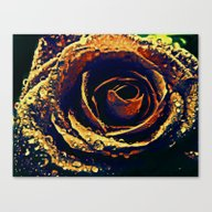 Canvas Print featuring Rose With Tears Crossing by Die Farbenfluesterin