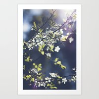 Backlight Blossoms Art Print