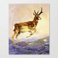 Pronghorn In The Morning Canvas Print