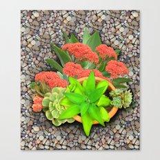 Flowering Crassula Perfo… Canvas Print