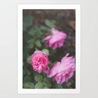 French Garden (1) Art Print
