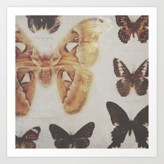 Butterfly specimens Art Print