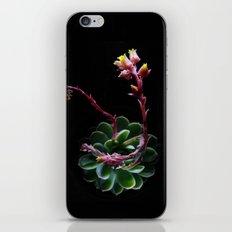 Succulent  iPhone & iPod Skin