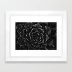 Sempervivum #1 Framed Art Print
