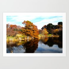 Arnold Arboretum Art Print