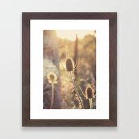 Sunlit Thistle Framed Art Print