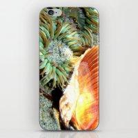 Anemone & Shell iPhone & iPod Skin