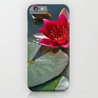 iPhone & iPod Case featuring Red Waterlily by Steve Watson