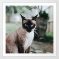 Blue-eyed Cat Art Print