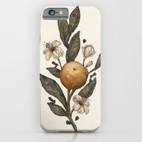 iPhone Cases featuring Clementine by Jessica Roux