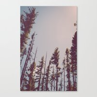 Forest Treetops Canvas Print