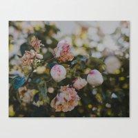 White Roses Canvas Print