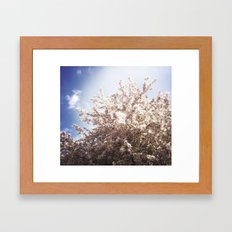 Blossoms in Spring Framed Art Print