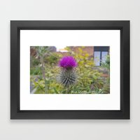 the scottish thistle. Framed Art Print
