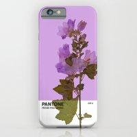 PANTONE 529 U iPhone 6 Slim Case