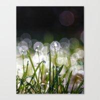Morning Lights Canvas Print