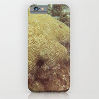 iPhone & iPod Case featuring Coral  by Brianms18