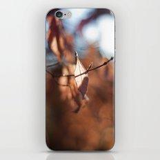 Late Autumn Light III iPhone & iPod Skin