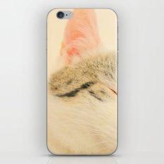 Peachy Kitty iPhone & iPod Skin