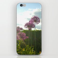 Purple Pansy iPhone & iPod Skin