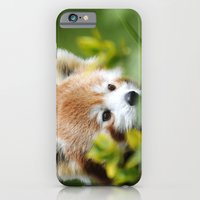 iPhone & iPod Case featuring Red Panda 4 by Stephie Butler Photography