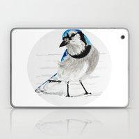 Blue Jay (Cyanocitta cristata) Laptop & iPad Skin