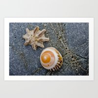 shell duo Art Print