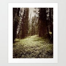 Mountain Forest Clearing Art Print