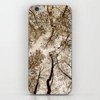 Sepia fall iPhone & iPod Skin