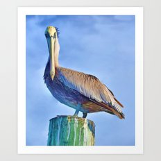 Perching Pelican Art Print
